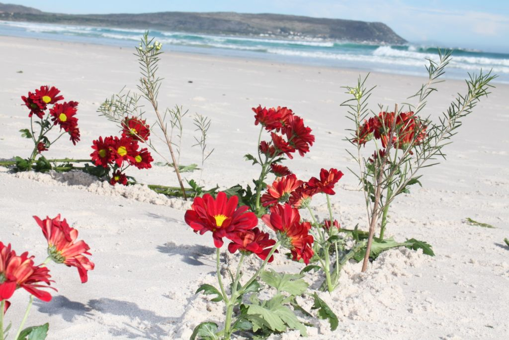 red-flowers-against-sea