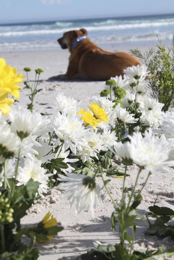 flower-closeup-with-gypsy