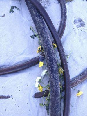 seaweed-tangle