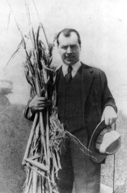 vavilov and corn