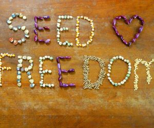Call to action from Seed Freedom